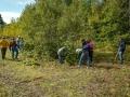 Sevadars cutting small trees.